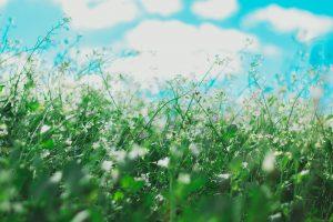 wild weeds and pollen